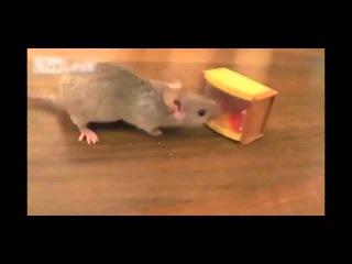 Мышка наряжает ёлку