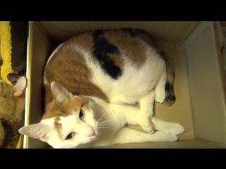 Многокомнатная квартира для котов