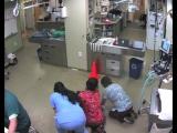 Пес в ветеринарной клинике