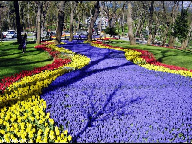 Emirgan Korusu istanbul - Lale Festivali Tulip Feast [HD Video]