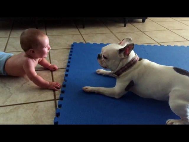 Хороший друг всегда знает как развеселить тебя Французский бульдог привел младенца в восторг
