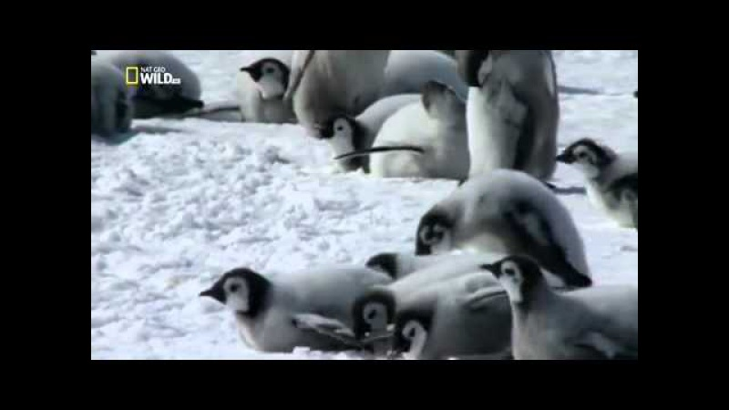Дикая Антарктика Wild Antarctica 2015 Мир Животных Документальные фильмы Документал...