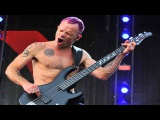 Red Hot Chili Peppers - Can't Stop (Bass Only - Isolated Track)