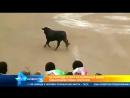 В Перу во время корриды разъяренный бык выпрыгнул с арены и набросился на зрителей