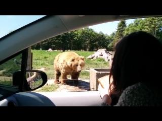 Самые Смешные Приколы с Животными