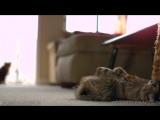 Коты в замедленном действии, очень круто!