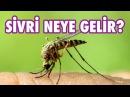 Sivrisineklerin Sizi Sevmesi İçin Bunları Yapın