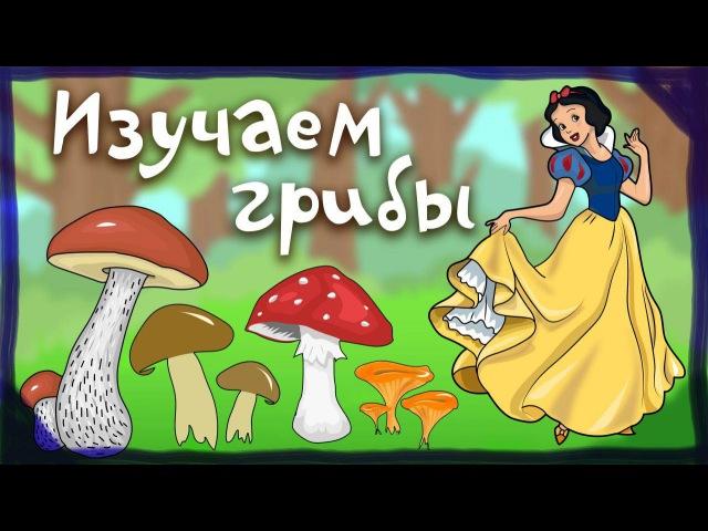 Белоснежка и гном изучает грибы. Обучающие мультики для детей от 0 до 4х лет