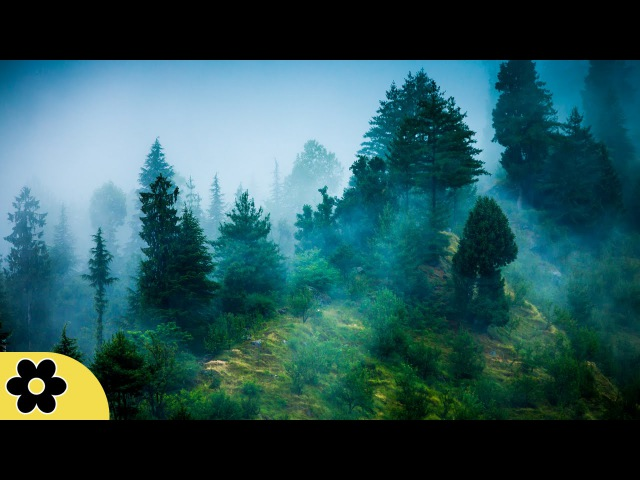 3 Hour Zen Meditation Music: Nature Sounds, Relaxing Music, Calming Music, Healing Music, ✿071C