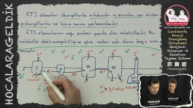 Canlılarda Enerji Dönüşümü - Solunum - Oksijenli Solunum -2 (Elektron Taşıma Sistemi)