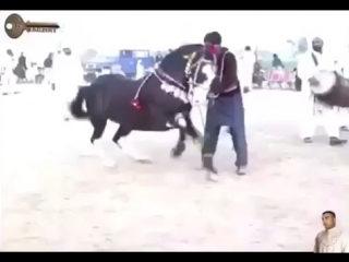 Конь танцует лезгинку