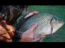 Ловля карася. Рыбалка на КРУПНОГО, ЗАЧЕТНОГО карася. Как и на что ловить карася п ...