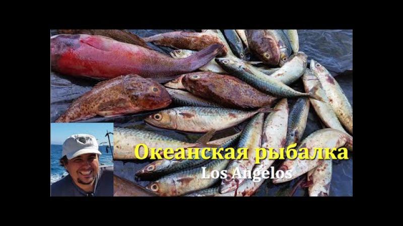 Deep sea fishing LA глубоководная рыбалка в тихом океане Лос Анжелес