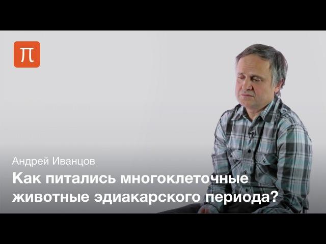 Древнейшие многоклеточные животные — Андрей Иванцов