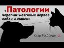Патологии черепномозговых нервов собак и кошек. Cranial nerve disorders in dogs and cats