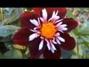 чарующие своей красотой цветы и музыка