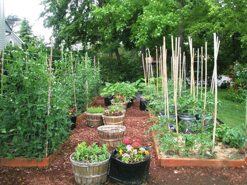 Современный огород: варианты и планировка огорода, фото