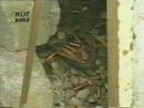 Скачать клип Сектор Газа Демобилизация Скачать клипы бесплатно