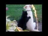 Смешные видео про кошек и котят! ТОП-5 подборка