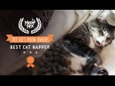 Meow Mix® Brand Presents the Cat's Meow Award™ Winner for Best Cat Napper!