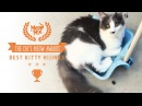 Meow Mix® Brand Presents the Cat's Meow Award™ Winner for Best Kitty Hijinks!