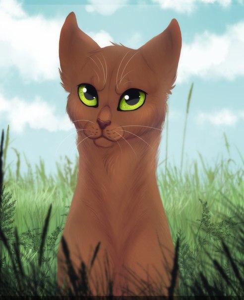 Фришки котов