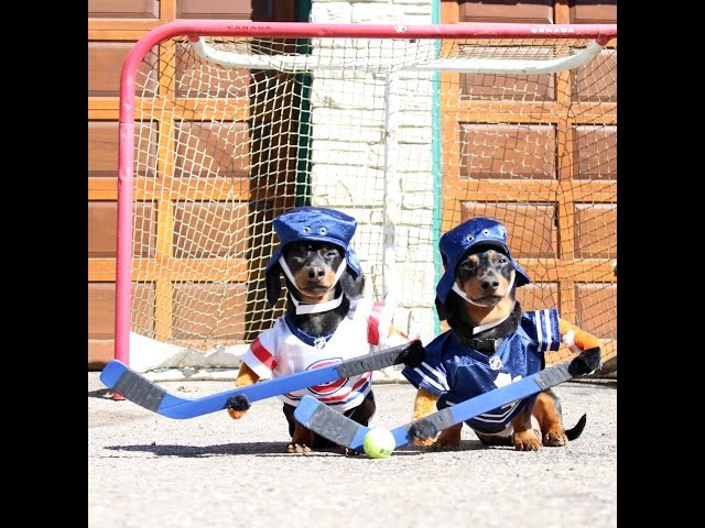Crusoe Oakley Dachshund Play Ball Hockey