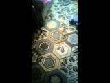 Лайка VS Пылесос | Laika VS vacuum Cleaner