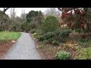 Bodnant. Ботанический сад Уэльса. Один из прекраснейших в Англии.