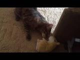 Кот и говорящий хомяк