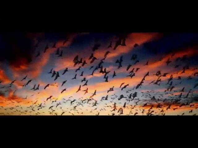 Интересный документальный фильм о смысле жизни » Freewka.com - Смотреть онлайн в хорощем качестве