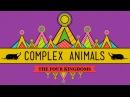 Complex Animals: Annelids Arthropods - CrashCourse Biology 23