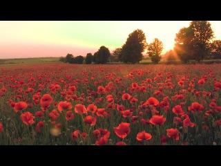 Макове поле/ Poppy field