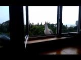 Альбатросовая песня. Симеиз. Крым 2014.