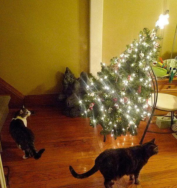 n2aHGg k25c - Как кошки могут помочь украсить новогоднюю елку (ФОТО)