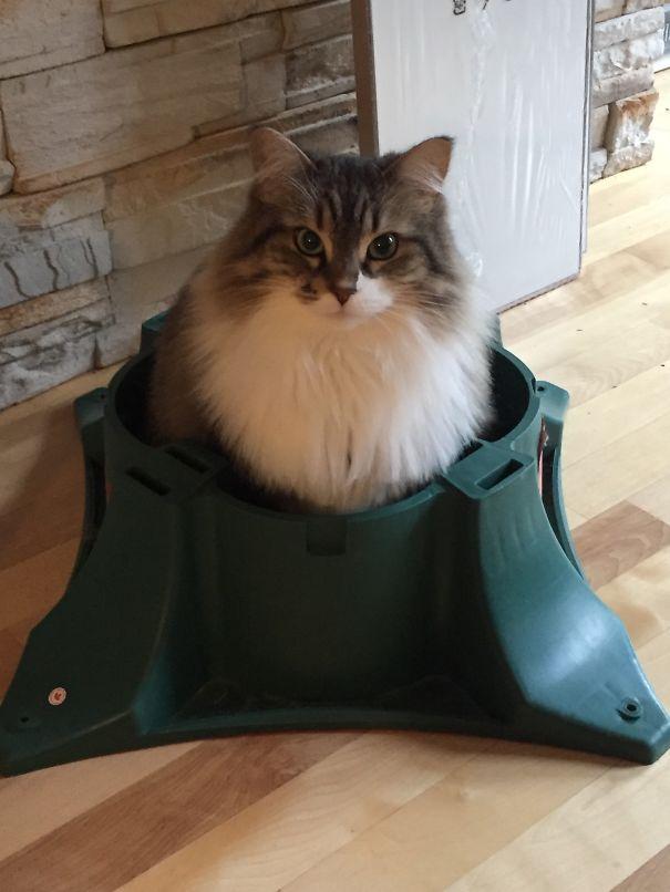 4fuezWBjaE8 - Как кошки могут помочь украсить новогоднюю елку (ФОТО)