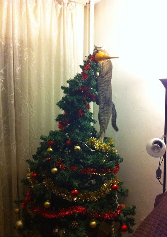XsK0NP FYbE - Как кошки могут помочь украсить новогоднюю елку (ФОТО)