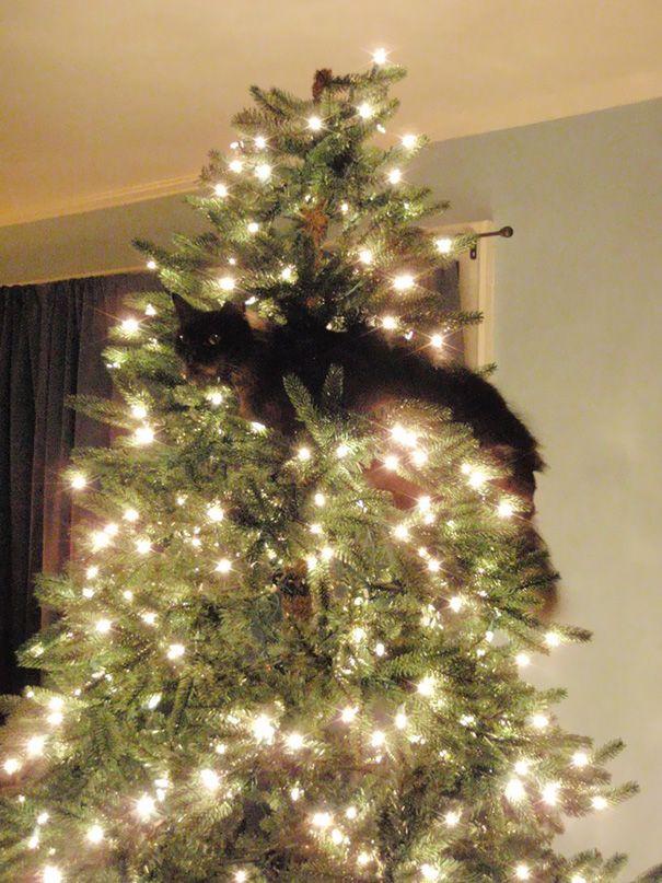 niek0nzeklY - Как кошки могут помочь украсить новогоднюю елку (ФОТО)