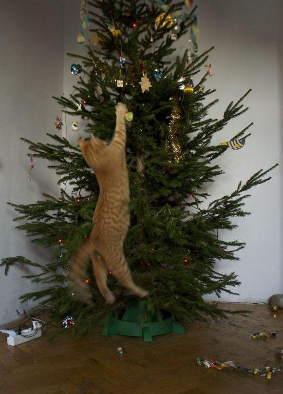 GAzczqRTGfI - Как кошки могут помочь украсить новогоднюю елку (ФОТО)