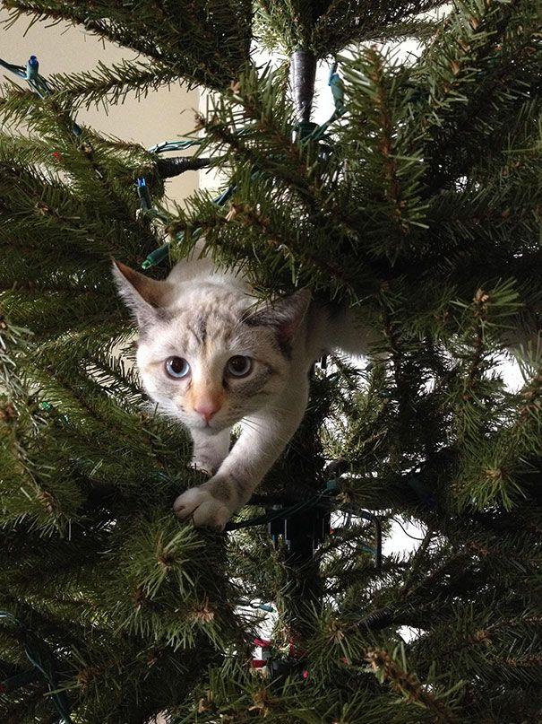 1lezTQFfwXo - Как кошки могут помочь украсить новогоднюю елку (ФОТО)