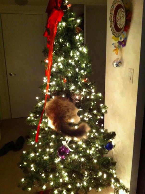 bSDuBmpG7Kc - Как кошки могут помочь украсить новогоднюю елку (ФОТО)