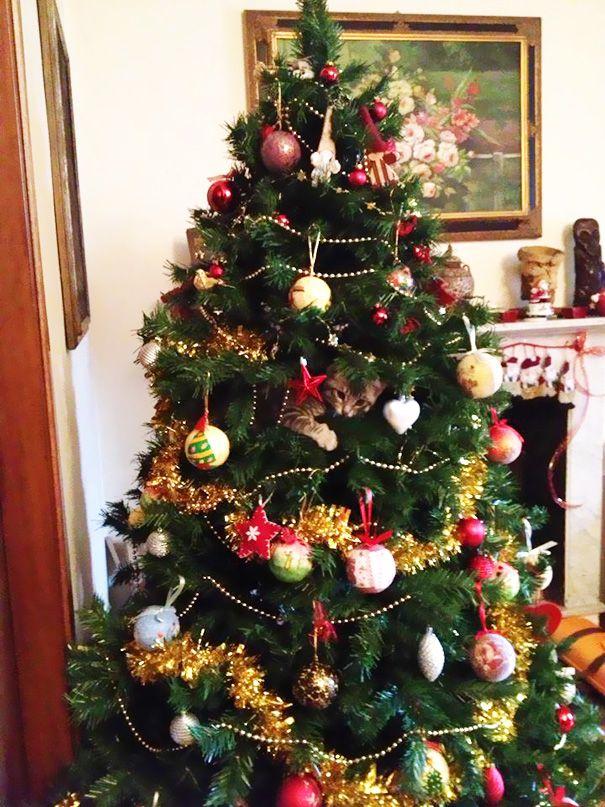 tWFQok7rBNU - Как кошки могут помочь украсить новогоднюю елку (ФОТО)