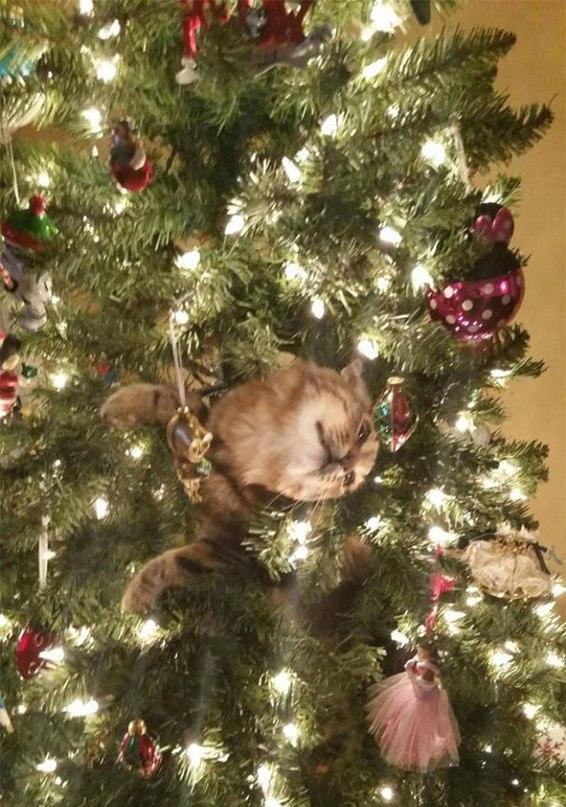 BD5mGyiDjTo - Как кошки могут помочь украсить новогоднюю елку (ФОТО)