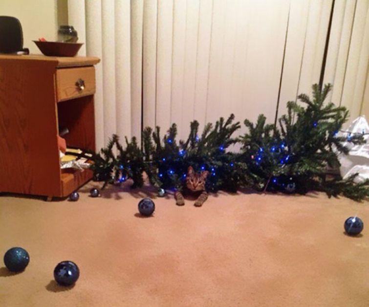 ytsicCIrE6k - Как кошки могут помочь украсить новогоднюю елку (ФОТО)