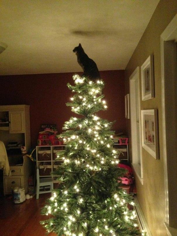 VKe63xmD46k - Как кошки могут помочь украсить новогоднюю елку (ФОТО)