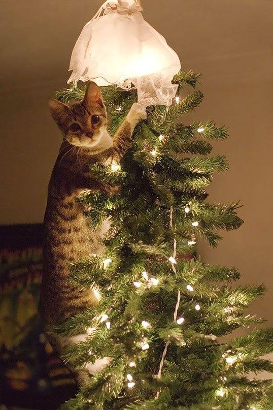 Jiv89GSie E - Как кошки могут помочь украсить новогоднюю елку (ФОТО)