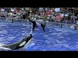 Черный плавник / Blackfish