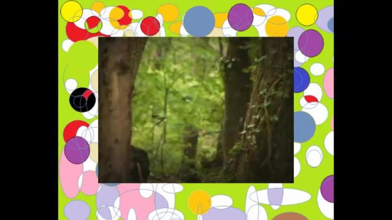 Насекомые букашки 17 Божья коровка и стрекозы