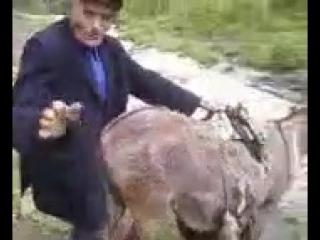 Хач ебет ишака