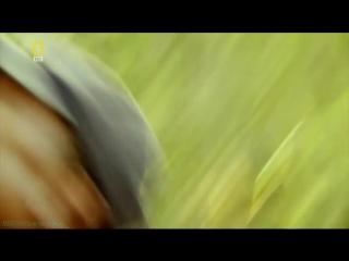 «Охота на охотника: Ярость носорога» (Документальный, животные, 2007)